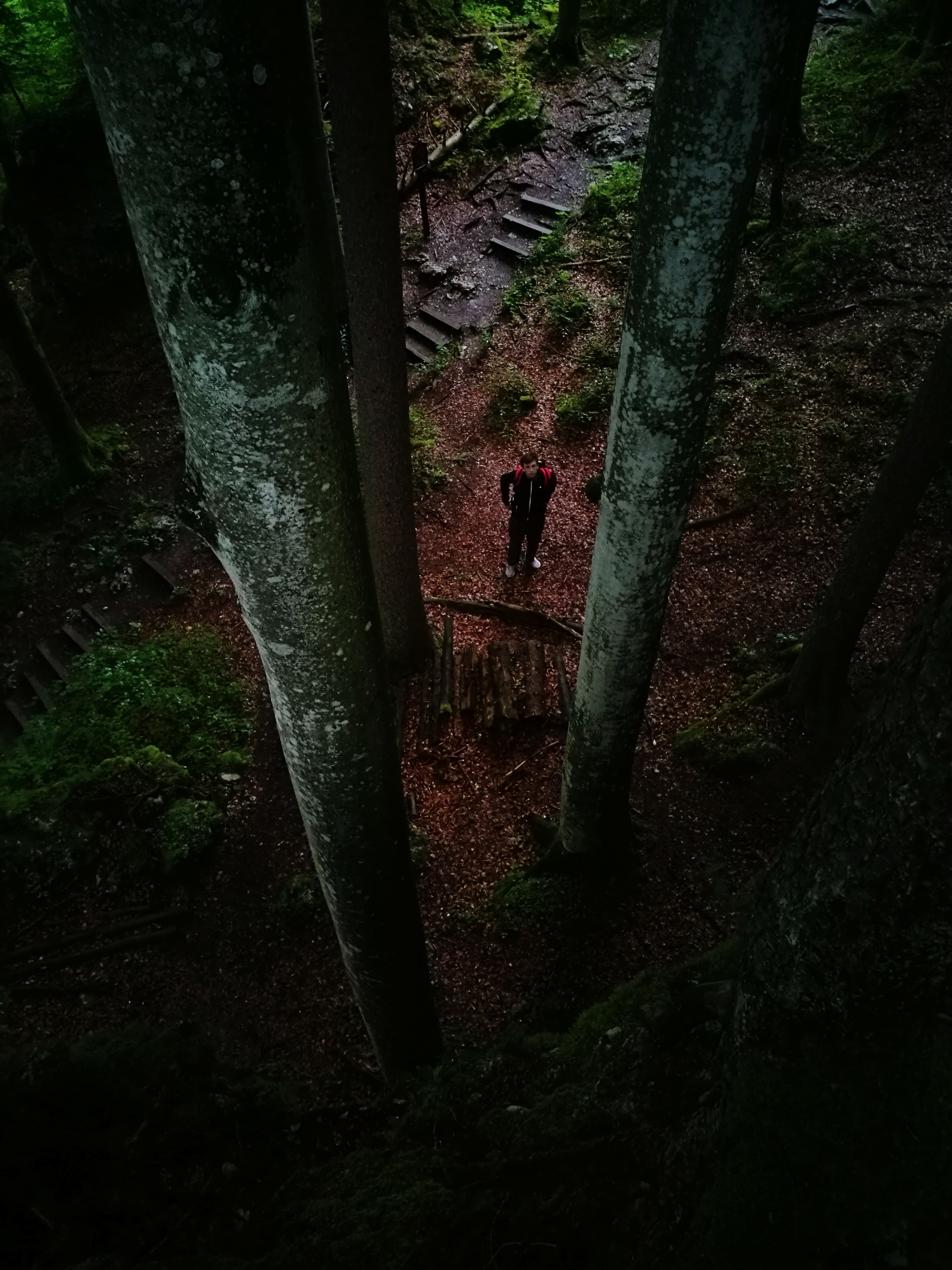 tree, tree trunk, nature, full length, two people, real people, moss, day, standing, outdoors, forest, leisure activity, growth, climbing, men, beauty in nature, people