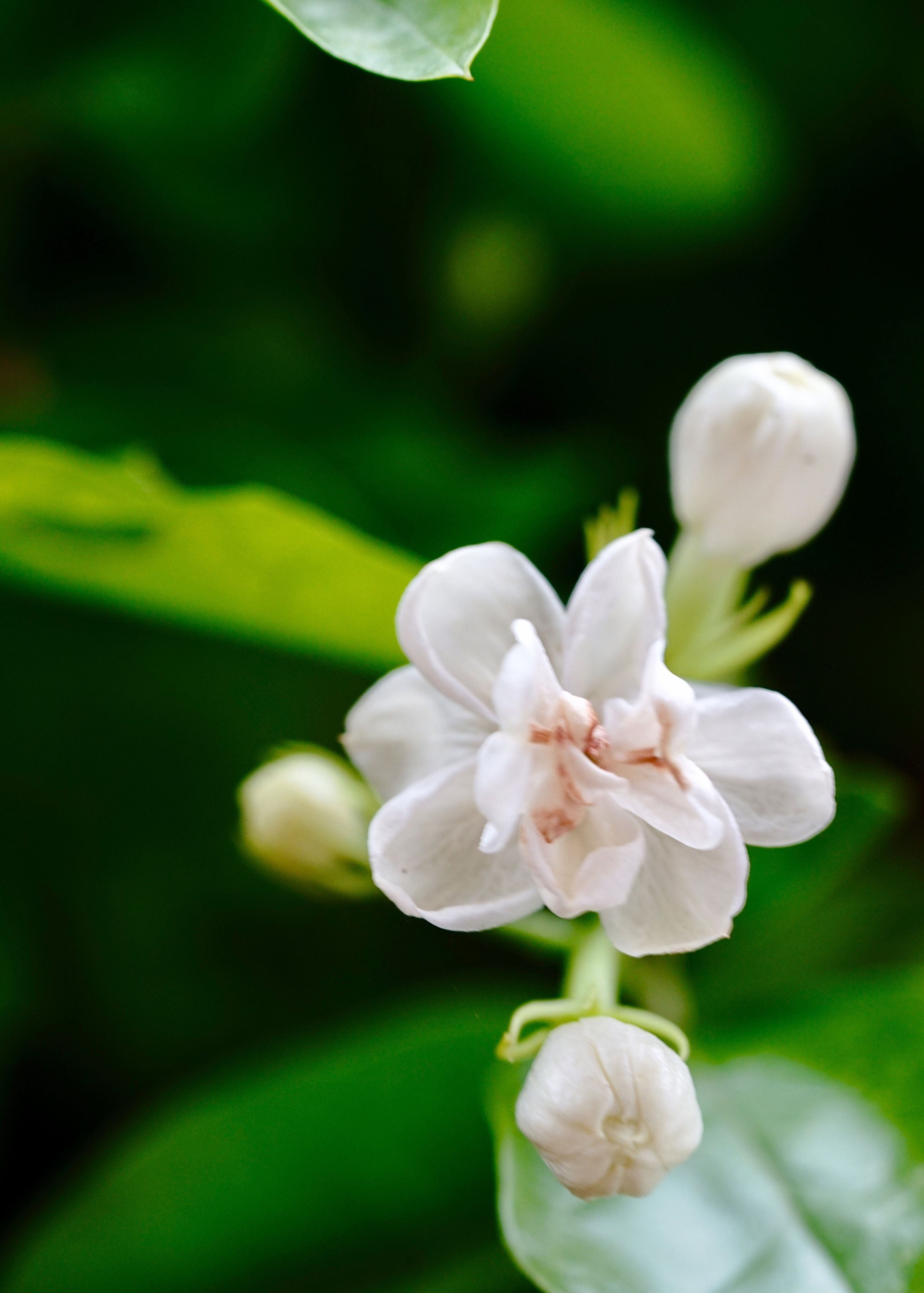 flower, white color, petal, nature, beauty in nature, fragility, growth, plant, flower head, freshness, no people, close-up, blooming, day, outdoors
