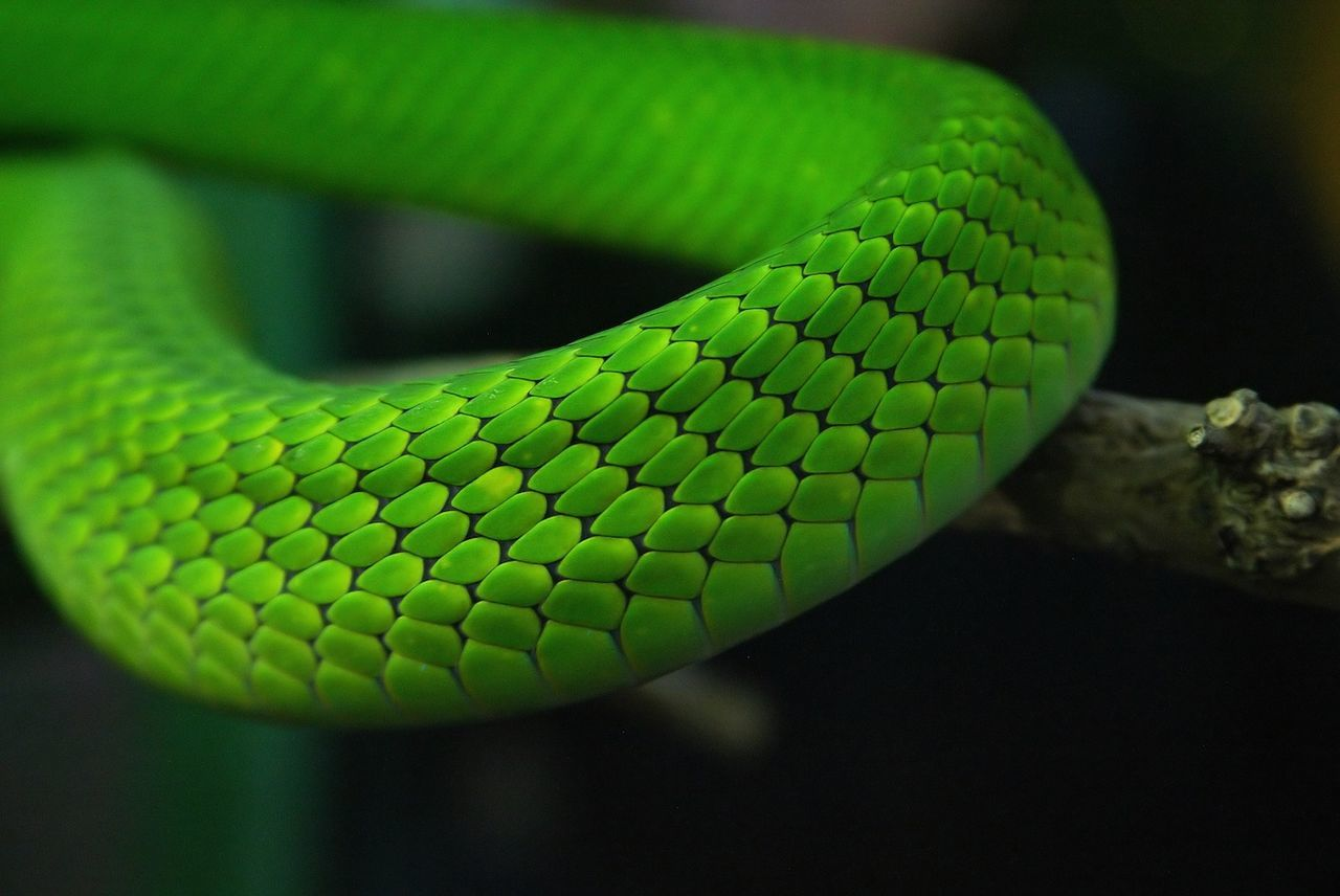 Beautiful stock photos of snakes, Animal Scale, Animal Themes, Animal Wildlife, Animals In The Wild