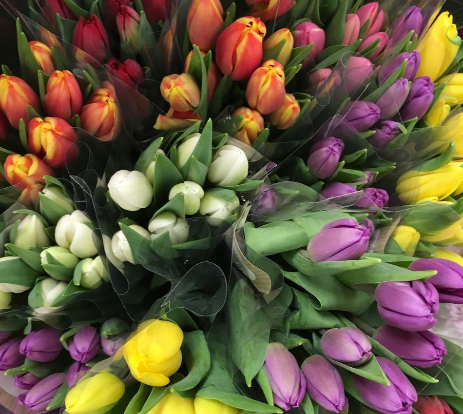 Flower Freshness Petal Fragility Tulip Beauty In Nature Multi Colored Retail  For Sale Flower Head Variation Choice Full Frame Arrangement Bouquet Backgrounds Flower Market Nature Flower Shop Close-up Art Is Everywhere
