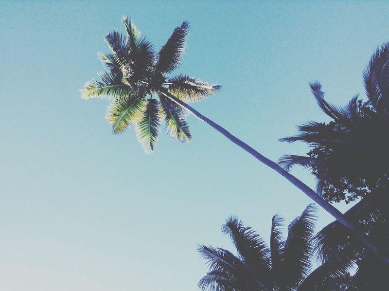 Palmtree at the beach Beachphotography INDONESIA Indonesia_photography Papua Beach Paradise