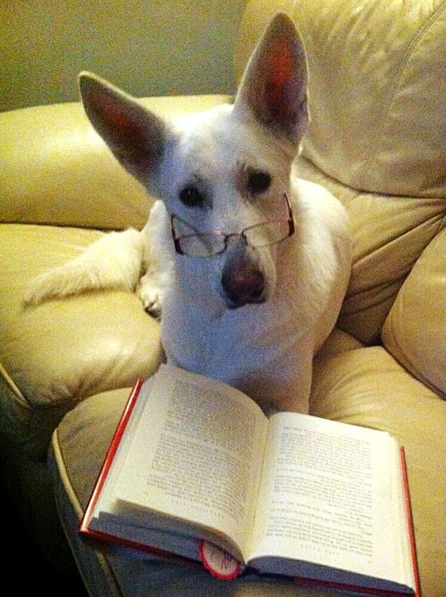 Dogs Of EyeEm Doggy Love Dogs Can Read Clever Dog Lexie Bear Pets Of Eyeem