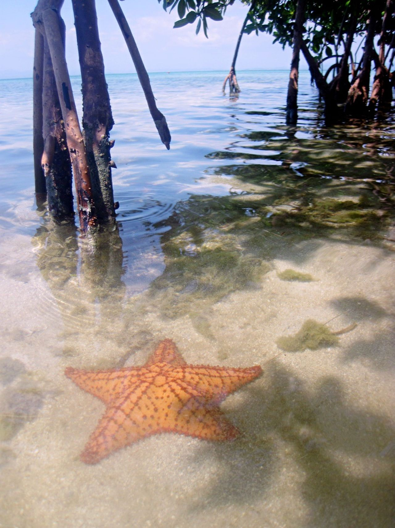 Beautiful stock photos of starfish, Airport, Animal Themes, Animals In The Wild, Beauty In Nature