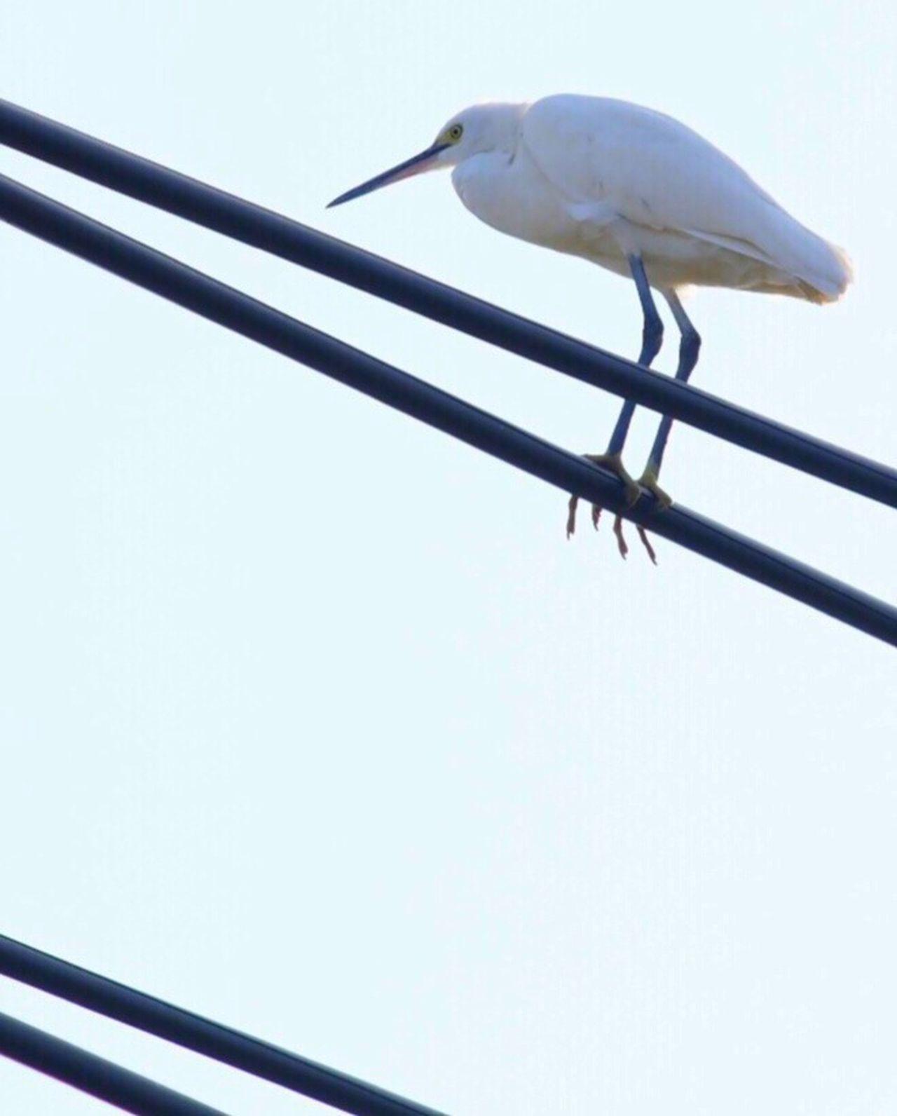 Birds Bird Bird Of Tokyo EyeEm Birds