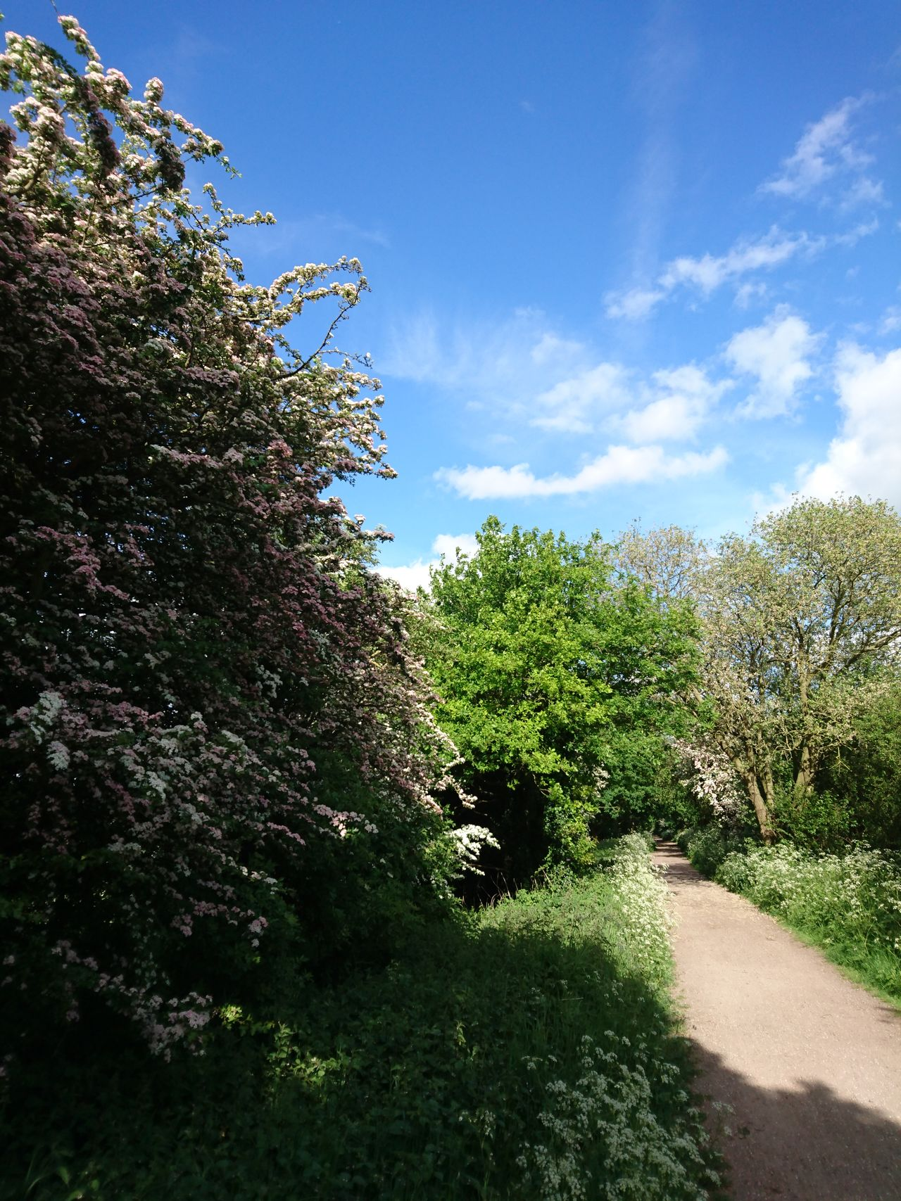 Beauty In Nature Blue Braintree Essex Brook Green Cloud Country Park Day Disused Railway Flitch Way Footpath Grass Green Color Growth Hawthorn Landscape Nature No People Outdoors Plant Sky Spring Sunlight Tranquil Scene Tranquility Tree