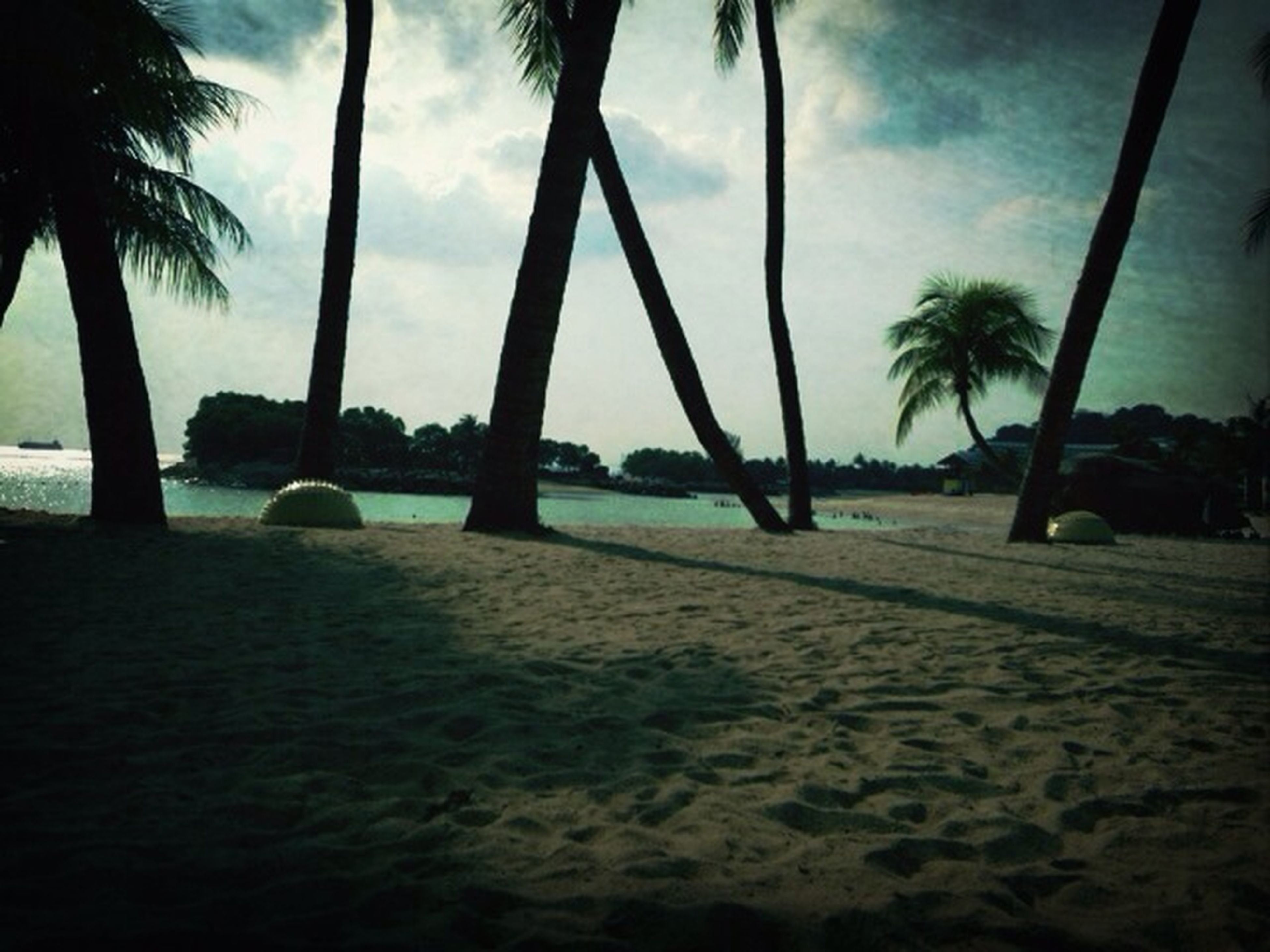 palm tree, beach, tree, sea, sky, water, sand, tranquility, shore, tranquil scene, silhouette, tree trunk, scenics, nature, beauty in nature, cloud - sky, horizon over water, vacations, sunlight, idyllic