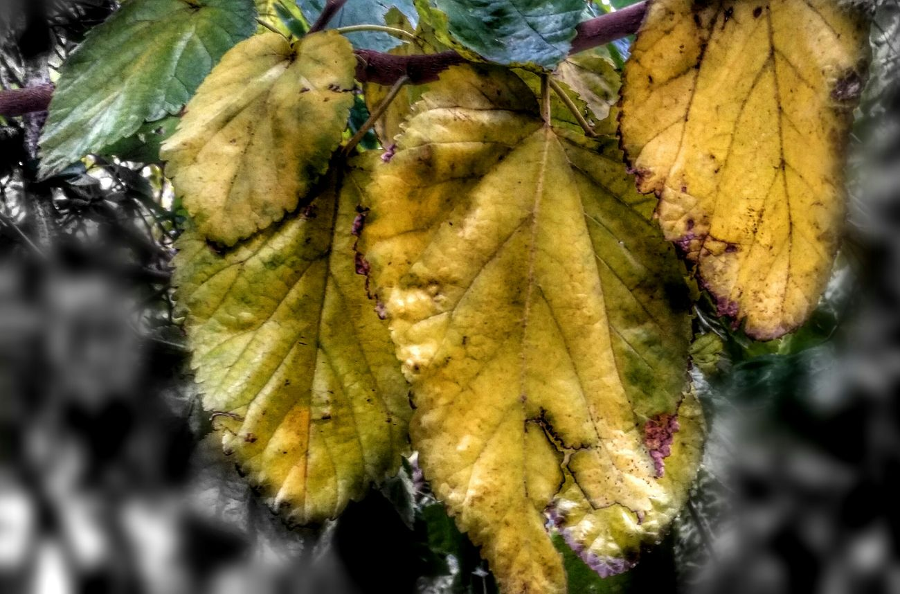 Gold... It's Cold Outside Yellow Leaves Deep Colors Shades Of Grey They All Yellow Golden Moment Leafs Leaf Veins Eye4photography  Winter Trees Leafporn Nature On Your Doorstep Rotten