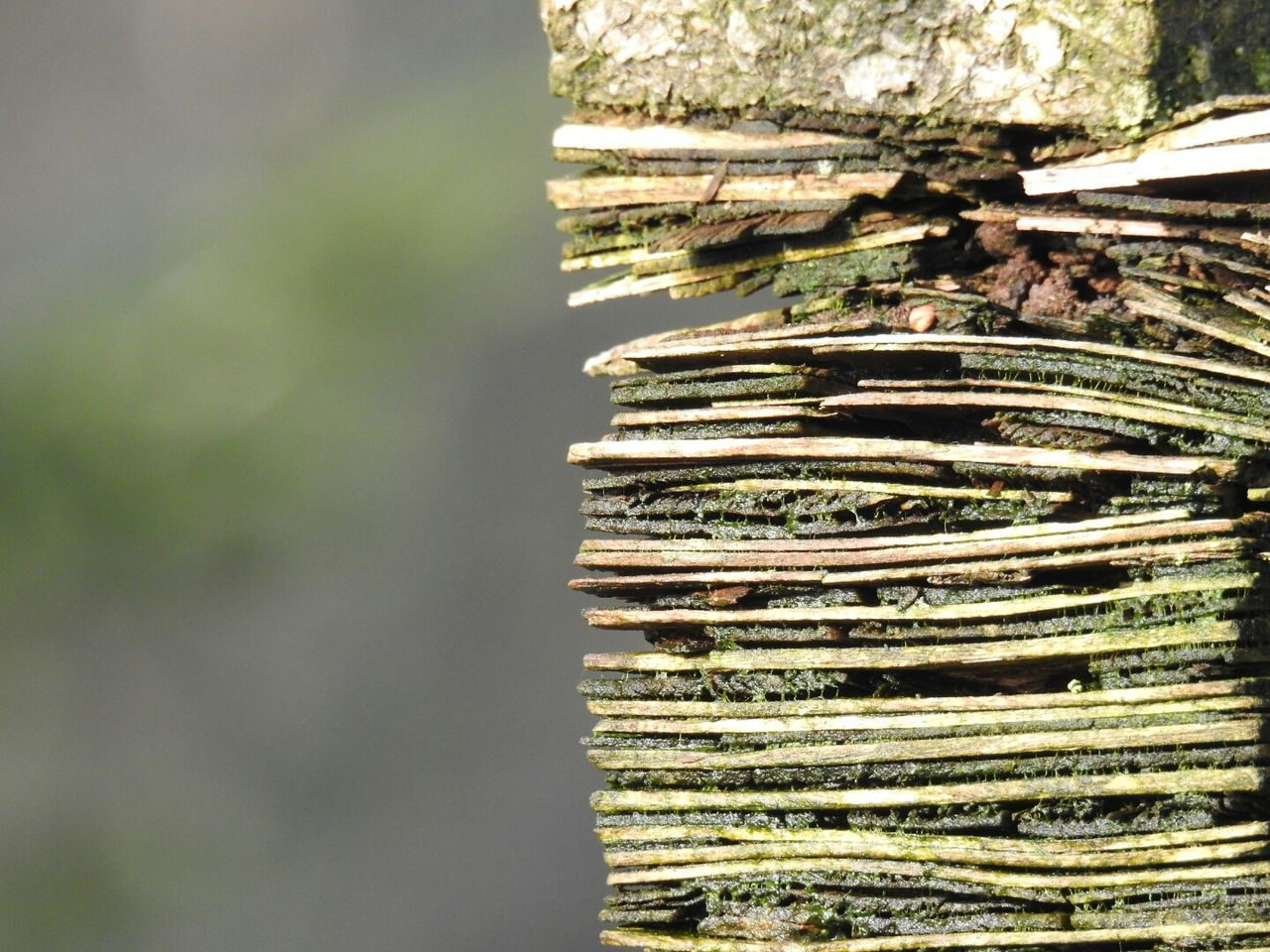 Pallet Wood - Material Textured  Close-up Focus On Foreground Still Life Wooden Texture Green Color Moss Pressed  No People Tree Photography Nikon P900 Germany Doğa EyeEm Gallery Nikon Outdoor Photography GERMANY🇩🇪DEUTSCHERLAND@ Taking Photos Wooden Forest Textured  Hello World