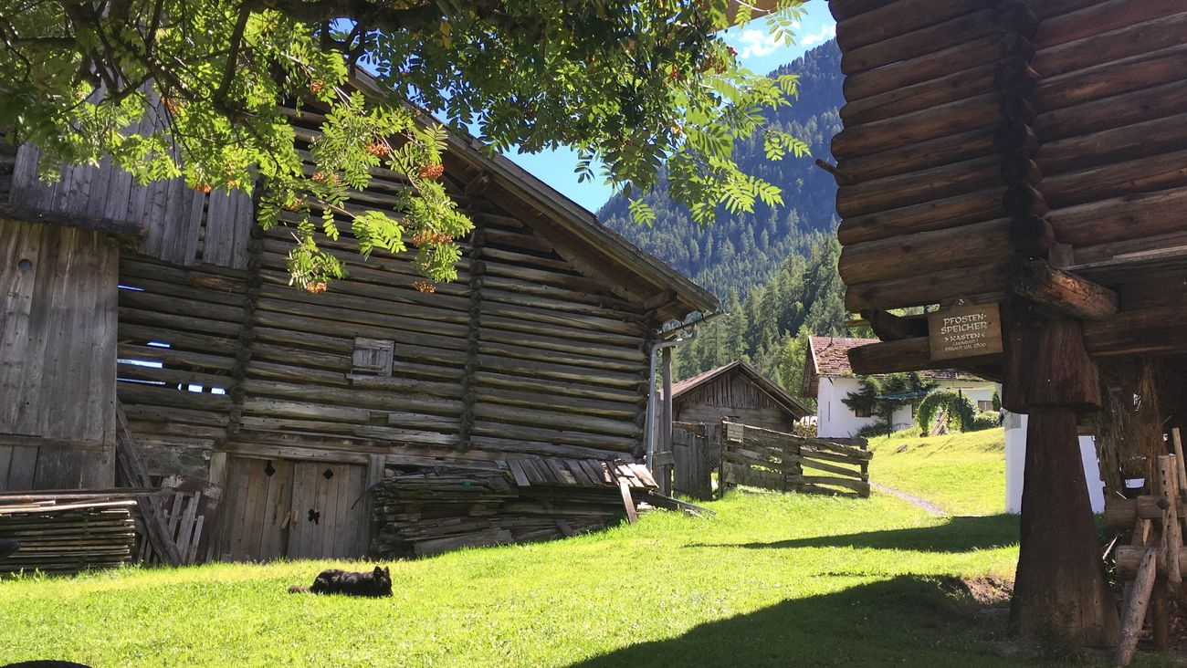 Architecture Built Structure Building Exterior Tree Grass Growth Façade Outdoors Day Exterior Sunny Green Color Folkmuseum Backyard Laengenfeld Oetztal