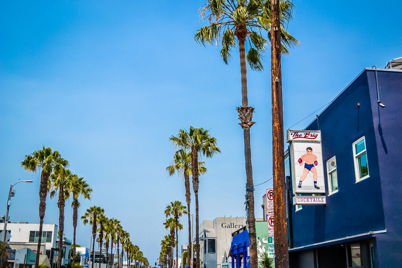 palm tree, tree, built structure, architecture, building exterior, blue, day, outdoors, sky, tree trunk, low angle view, no people, clear sky, nature, city