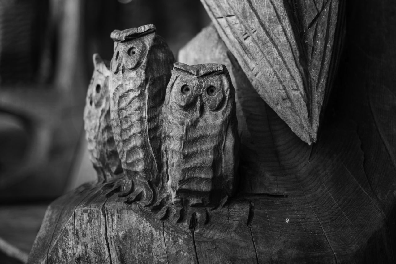 T-wit T-woo Blackandwhite Carving Carving - Craft Product Close-up Day Focus On Foreground National Trust Natural Pattern Nature No People Owls Part Of Portrait Selective Focus Winkworth Winkworth Arboretum Wood Wood - Material