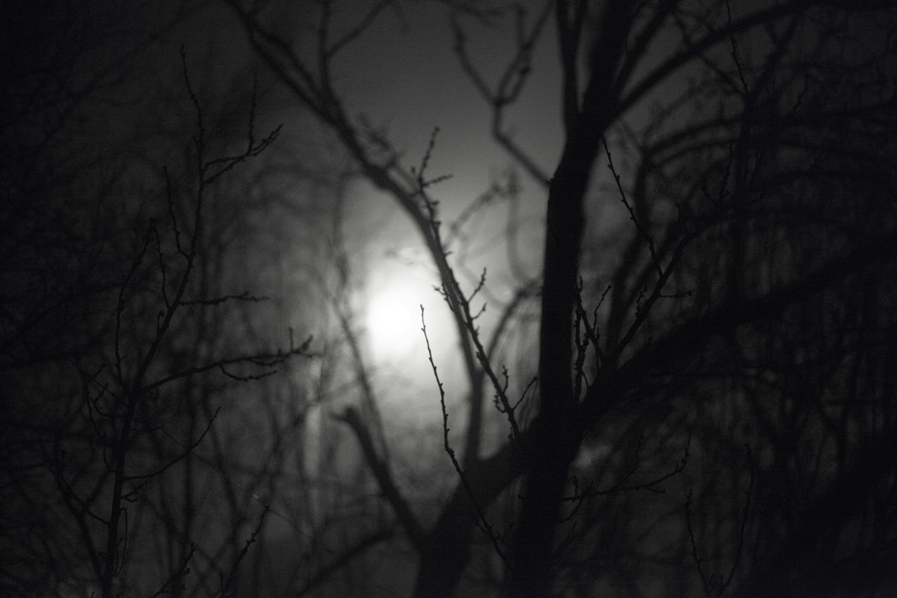 bare tree, tree, branch, nature, beauty in nature, night, tranquility, outdoors, silhouette, scenics, tranquil scene, no people, low angle view, moon, sky, astronomy