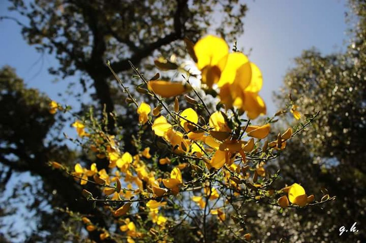Rsyos de sol, que se funden en plena naturaleza Primavera Springtime Spring Flowers Extremadura Extremadurafotos Sunlight Yellow Nature Beauty In Nature Day Flower Respirando Verde!  Senderismo Senderos Senderismoenextremadurs
