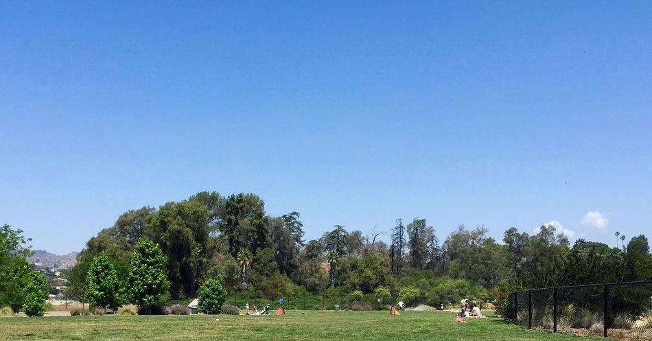 California Enjoying The Sun Relaxing Nature Park Silverlake East Hollywood