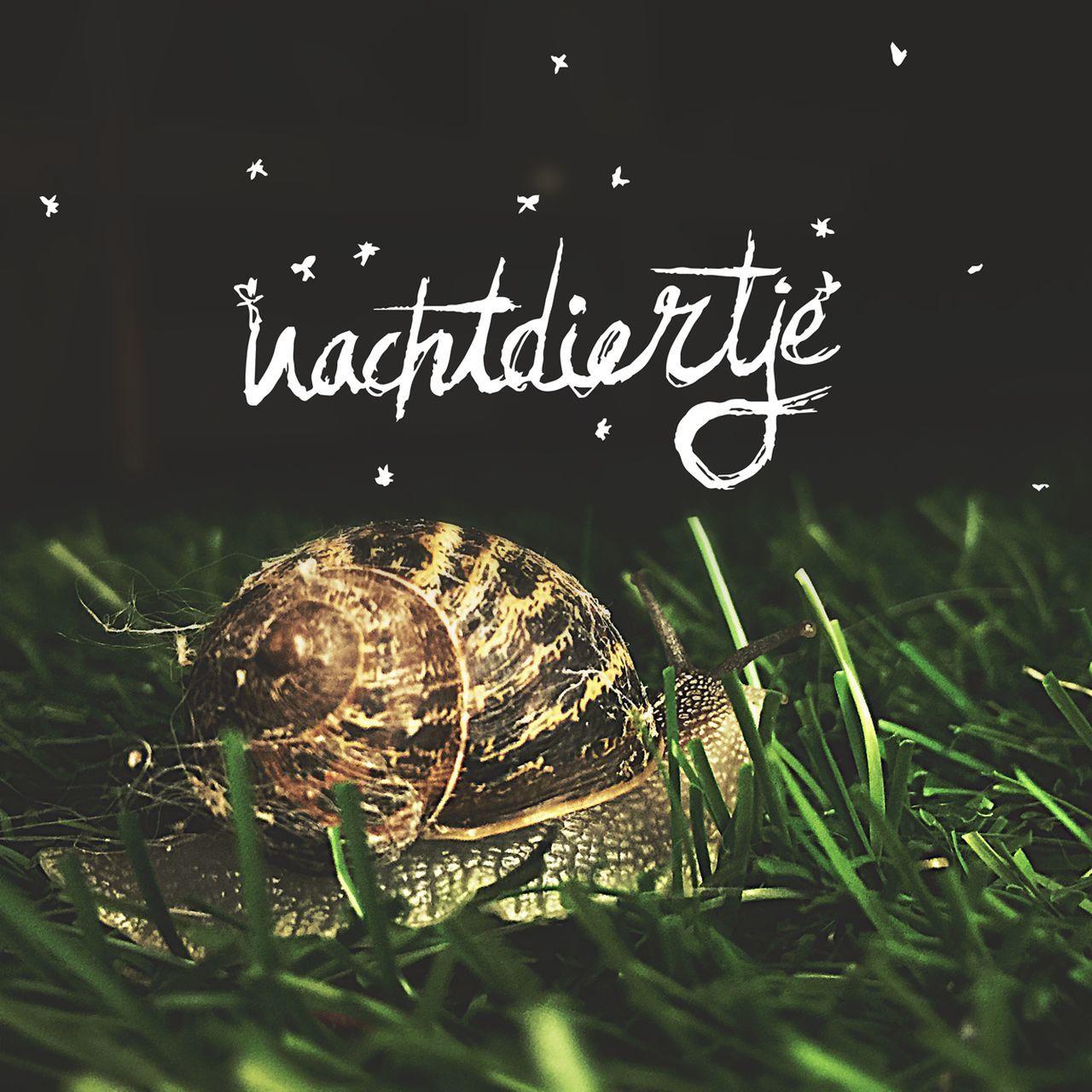 Nachtdier Vlissingen Tuin Gras  Slak Nacht Sterren Typography TYPOGRAFIE Tentypografie