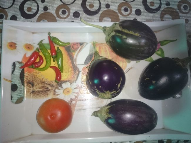 Harvest from the local kitchen garden. Some purple eggplant (brinjal), a tomato and a few green and red chillies. This is a garden where vegetables are grown in an organic setup, only in containers, plastic buckets. Brinjal Chillies Eggplant Food Growing Brinjal Growing Eggplant Growing Food Growing Tomatoes Harvest Home Garden Kitchen Garden Many Chillies Nature Organic Organic Garden Purple Brinjal Purple Eggplant Tomato
