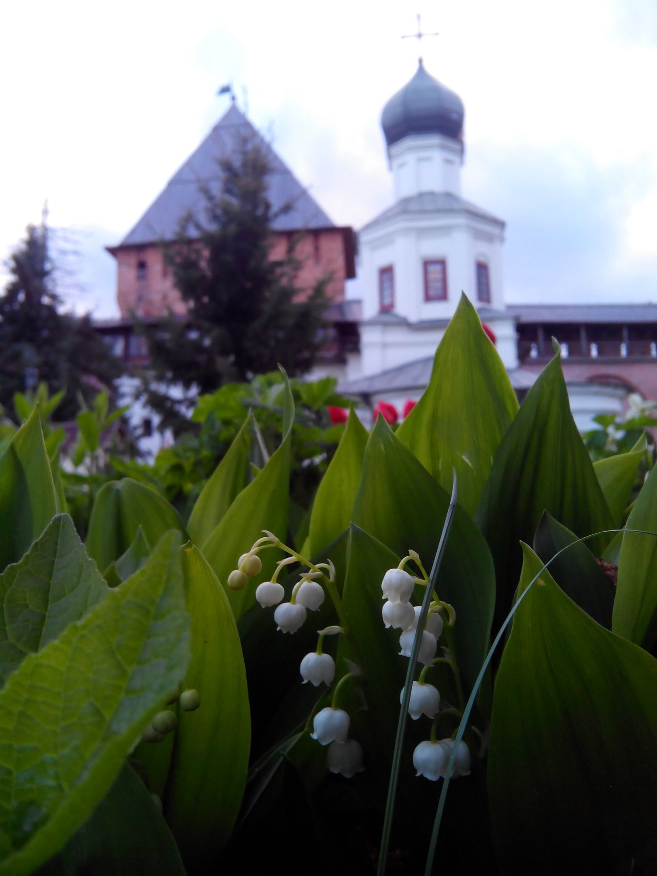 Novgorod Kremlin Nature Photography