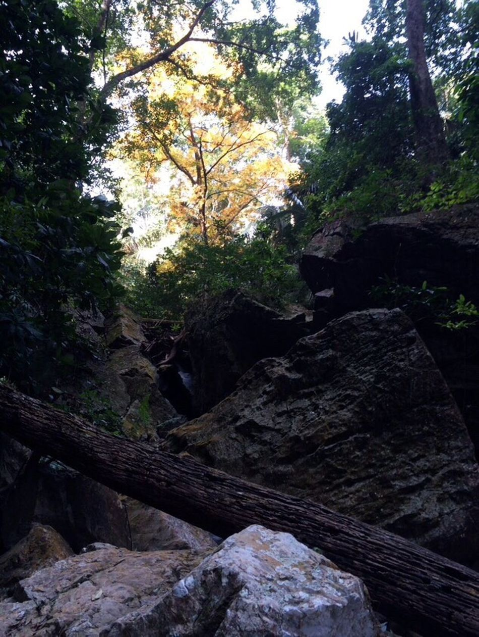 The Great Outdoors - 2016 EyeEm Awards Trees Rocks Waterfalls Water Timber Streams Water Green Sky Sun Shadows Nature