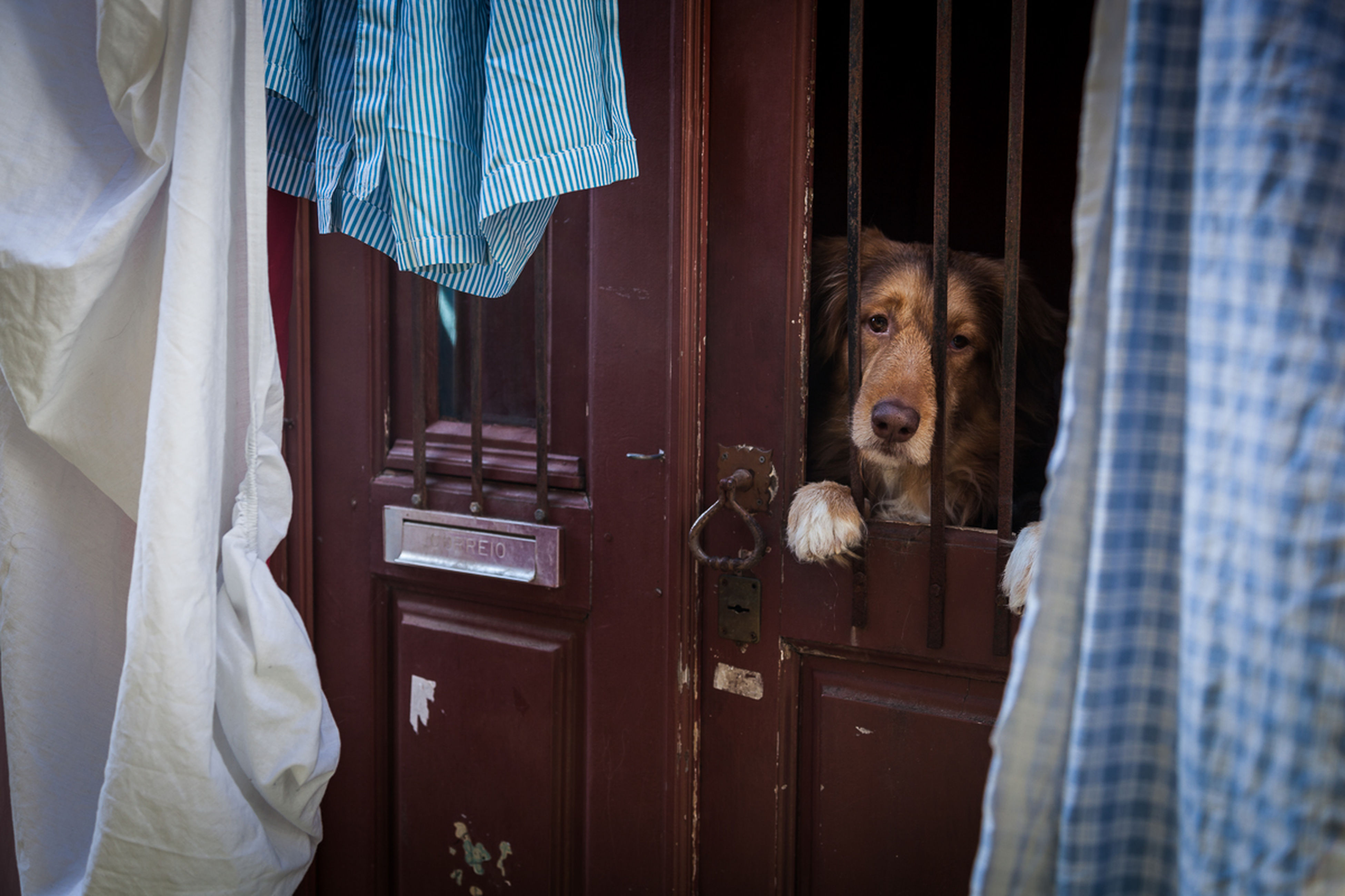 pets, dog, one animal, indoors, animal themes, domestic animals, mammal, no people, day