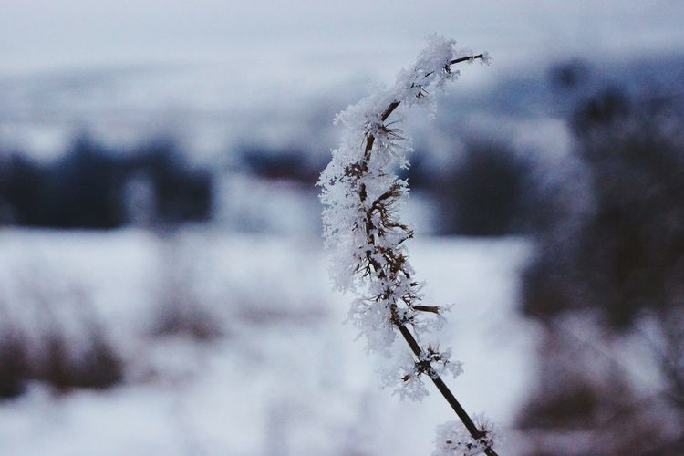 Smooth Perfection Nature Close-up Outdoors No People Animal Themes Day Water Vilage Weather Wintertime My World ♥ Snow ❄ Frozen Hello World ✌ Winter_collection Snowing Nature Tree Snow Beauty In Nature Cold Temperature From My Point Of View Frozen Silky