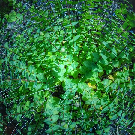 Found a bit of radial symmetry in the garden. (C) Kimberly J Tilley.