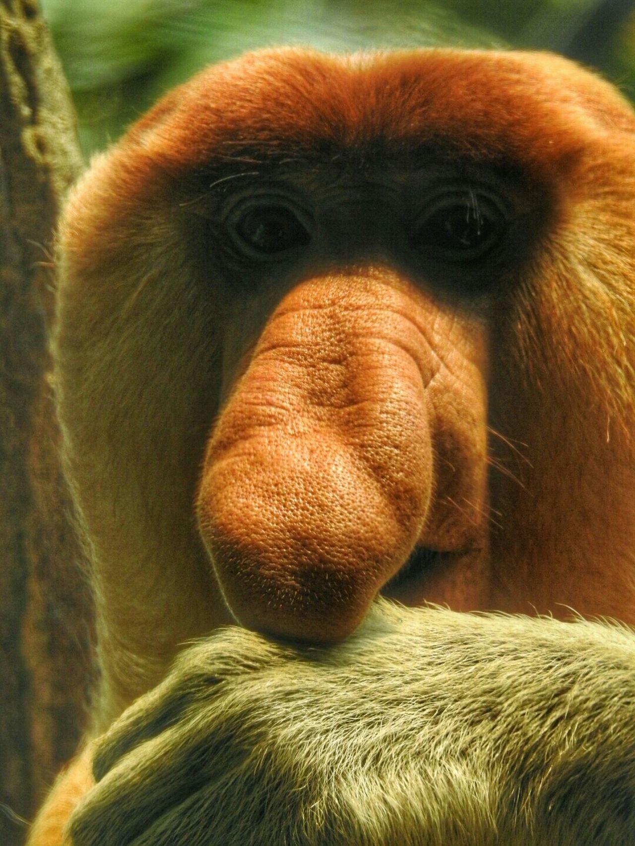Beautiful stock photos of funny animal, Animal Head, Animal Nose, Animal Themes, Animal Wildlife