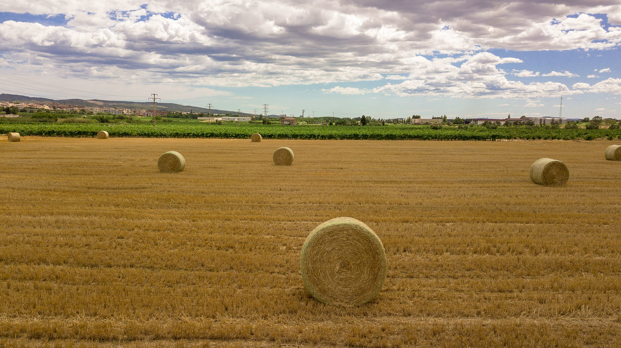bale, field, agriculture, hay, hay bale, harvesting, rural scene, farm, crop, landscape, rolled up, cloud - sky, tranquility, tranquil scene, sky, nature, day, no people, beauty in nature, scenics, grass, haystack, outdoors, tree