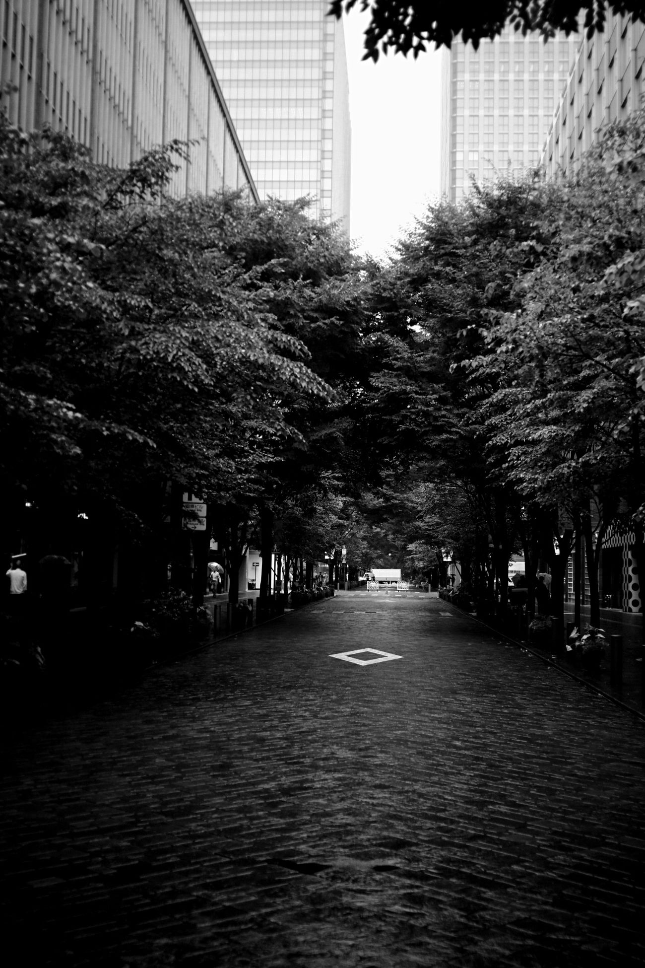 summer trip… Summer Views Monochrome B/w Carl Zeiss Biogon Canon M3