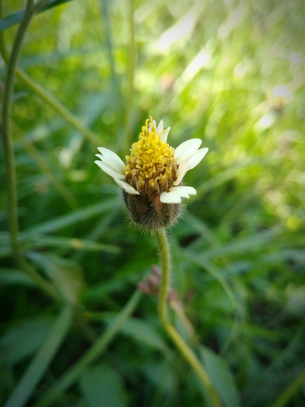 Nature Flower Close-up Beauty In Nature Growth Plant Fragility Outdoors Yellow Day No People Freshness Grass
