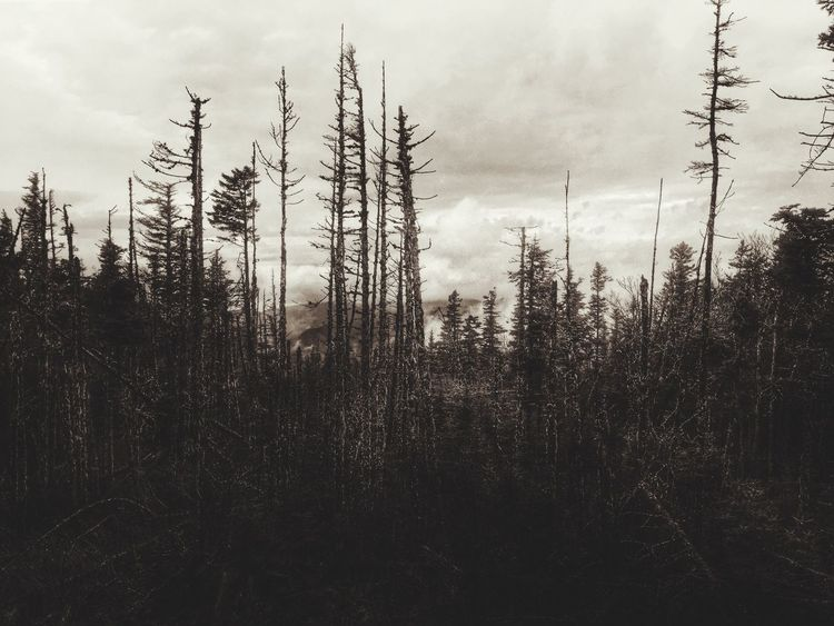 Death of the World. Forest Trees Silhouette Noir Blackandwhite Landscape Nature