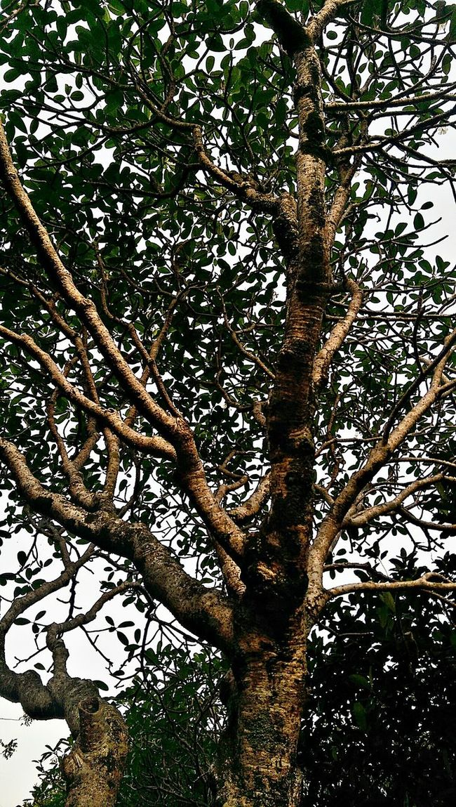 Better Angle 😁😁 Taking Photos Htcm8 Htc One M8 Hugging A Tree Outdoor Photography Enjoying The Sun Panoramic Bandung INDONESIA
