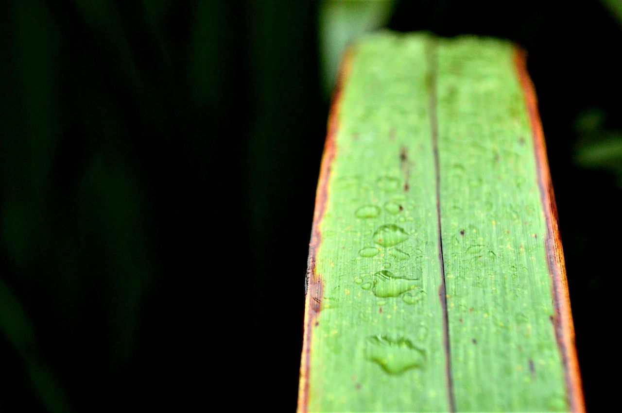 Beauty In Nature Close-up Day Freshness Green Color Growth Leaf Nature No People Outdoors Rain Drops On Leaves Tree Water Wet