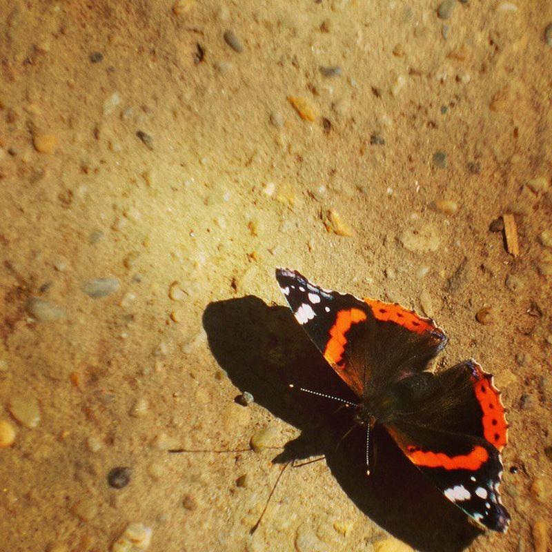 Mik Hungary Magyarország Fotoklub Butterfly Bugs Instagram Summer Autnum Spring Livehappy
