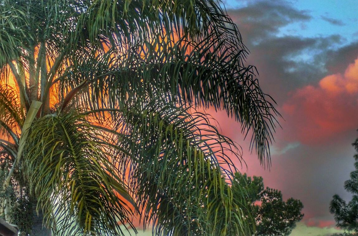 Sunset Palmtree Palmfronds Colorful Pink And Purple Sky Sky And Clouds Nature Outdoors Beauty In Nature
