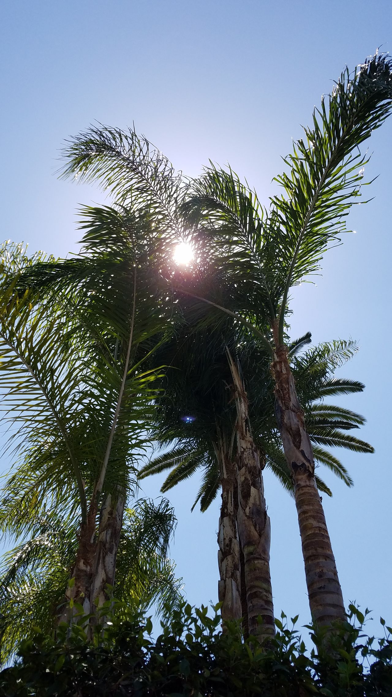 Natural Light No Edit Palm Trees Walking The Streets Beauty In Nature No People Growth Low Angle View Nature Leaf Street Photography Still Life Photography Fine Art Photgraphy Copy Space Check This Out Shadow And Light Sunlight Sun Sun Through Trees Relaxing In The Sun Leisure Activity Simple Outdoors Sky