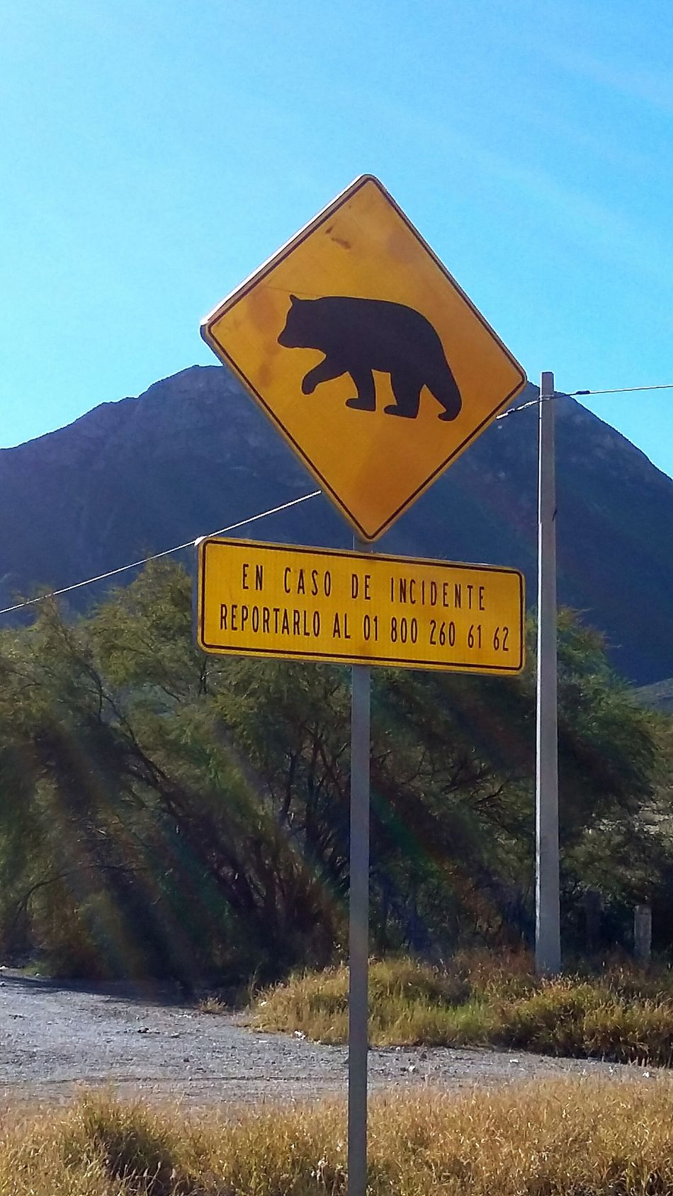 Road Sign Guidance Yellow Text No People Sky Nature Outdoors Day Bear Season Bears🐻 Camping Trip! Driving Around Adventurer