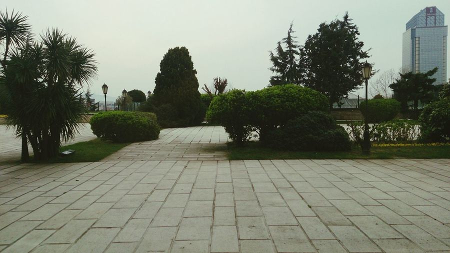 Holiday Hilton Hotel Istanbul City Bosphorus Turkey Green Garden Trees Besiktas Hilton