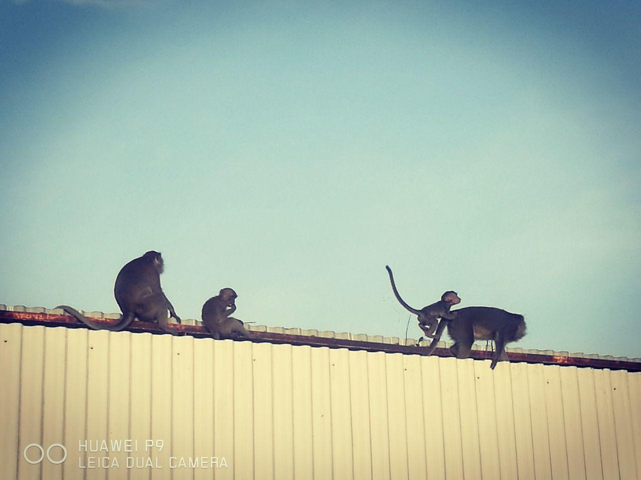 HuaweiP9 Huawei Monkeys Animal Family Relaxing