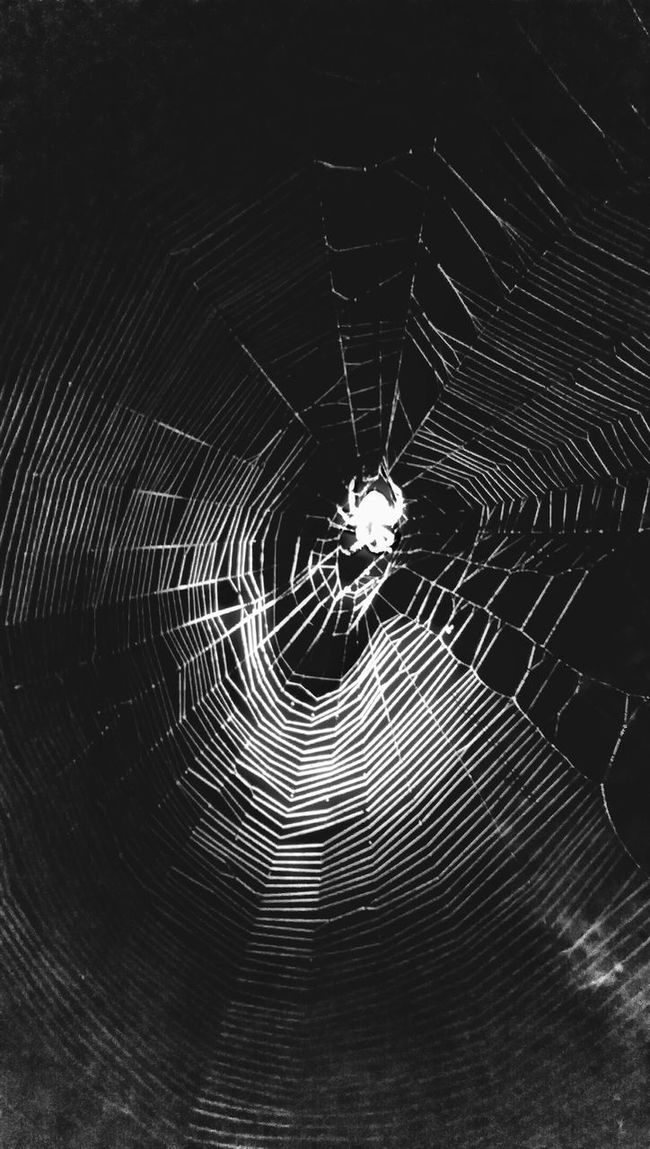 https://youtu.be/4HmG9Znkfnk The Impurist Black & White Nightmares And Dreamscapes Orb Weaver The Light Within  Beauty Of Nature Webporn Intricacy EyeEm Animal Lover We Are Nature Darkness And Life Year Of The Spider Musical Photos Lyricalartistry My Bw Obsession Spiders For Steven Arachni-therapy