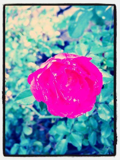 Flower Power'