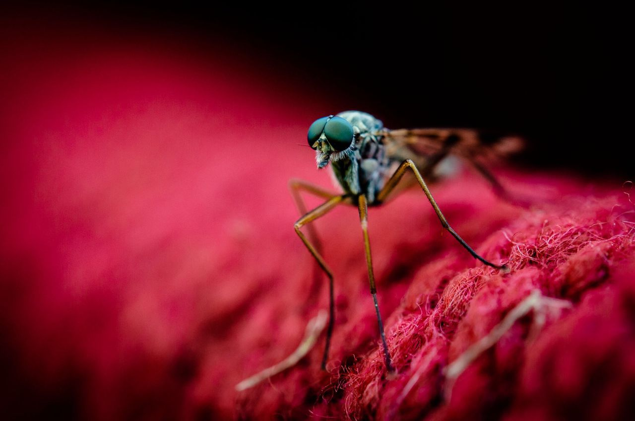 Beautiful stock photos of insects, Animal Themes, Animal Wildlife, Animals In The Wild, Close-Up