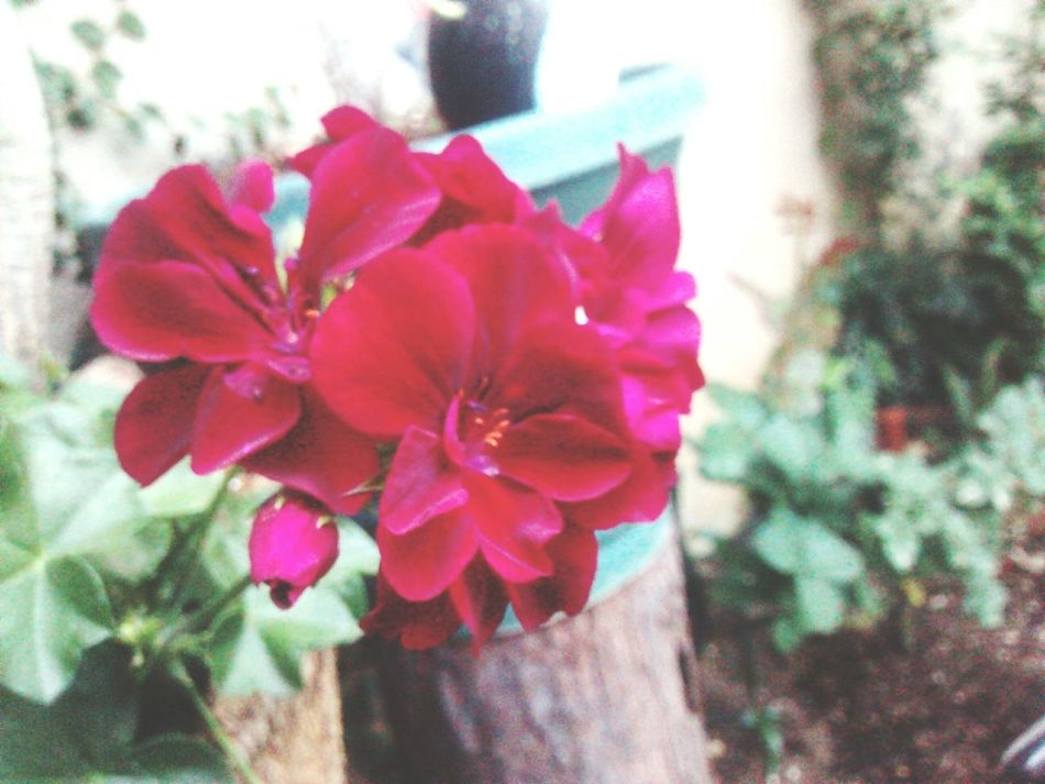 Flowers Flower Photography Guatemala City Madein502 Never Photography Summer