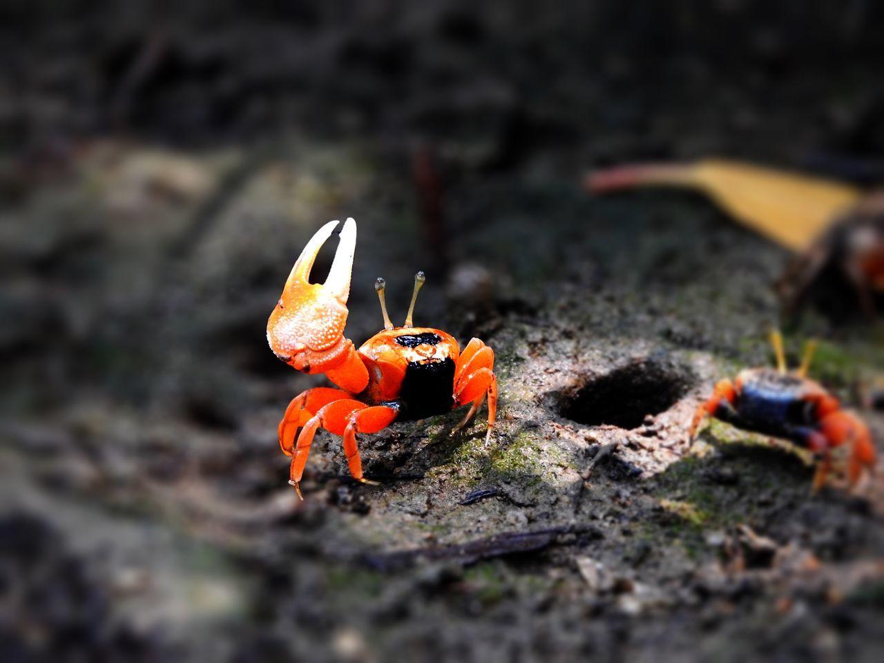 Red Crab Tadda Community EyeEm Nature Lover Seaside Wanna fighting?