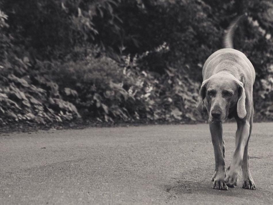 Beautiful stock photos of single, Animal, Away, Balanced, Best Friend