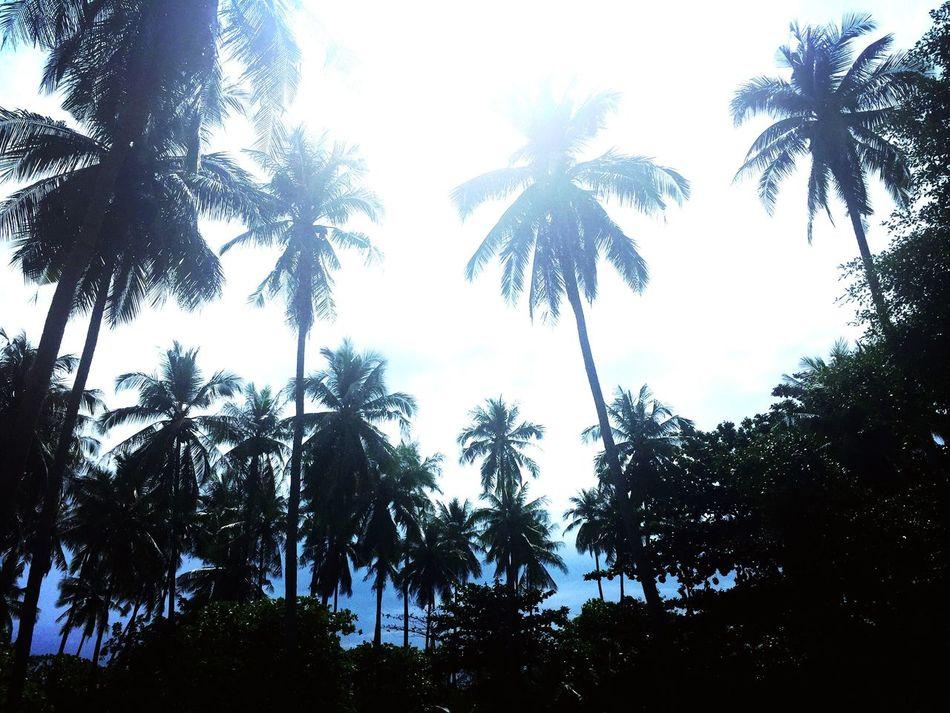 Palm tree heaven Taking Photos Enjoying Life Thailand LoveNature Followyourbliss Traveltheglobe Jungleland Haadwhynam Palm Trees