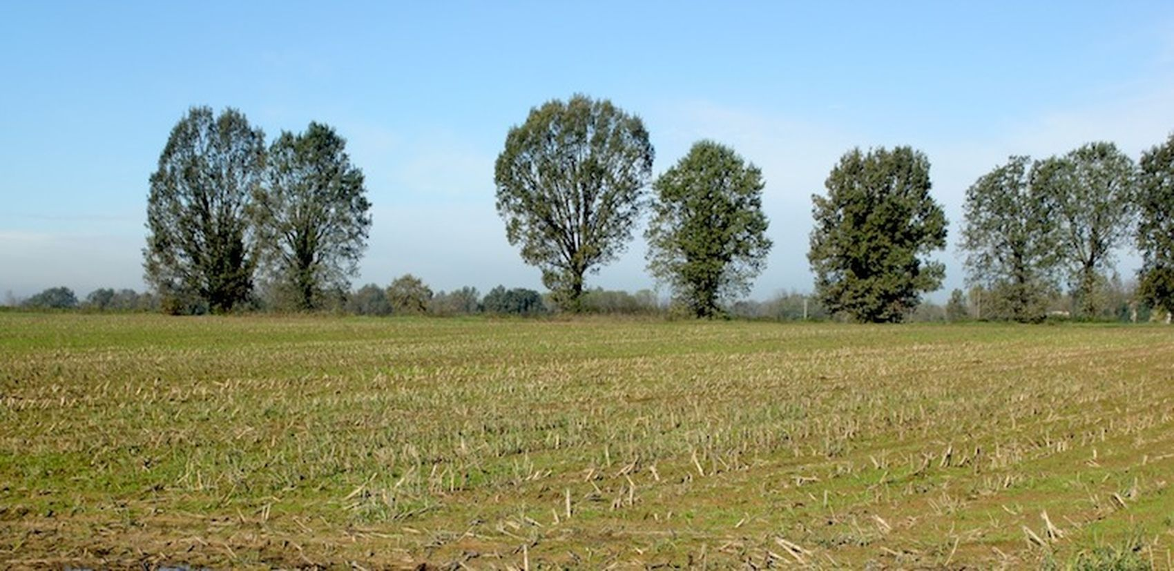 newsageagro.com - Pianura Padana Campo Agricoltura