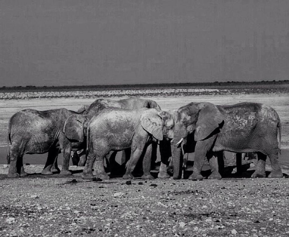 Namibia Wildlife Animals Noiretblanc Travel Photographer Elephant Etocha Safari