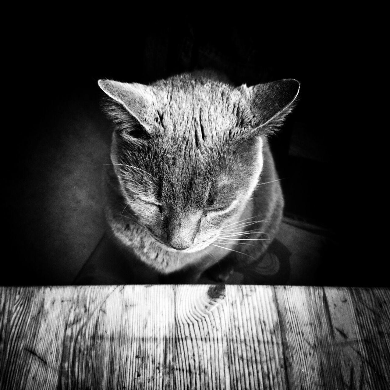 Wait, wait... Cat Lovers EE_Daily: Black And White Blackandwhite EyeEm Best Shots - Black + White