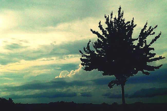 Nature On Your Doorstep Nature Clouds And Sky Sun&Clouds Tree Tree And Sky Tree_collection  Tree Silhouette
