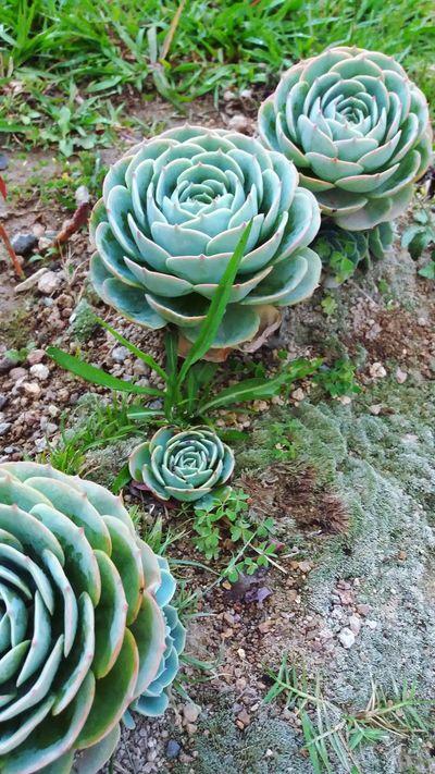 Plant Cactus